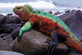 Expeditie Galapagos si Ecuador