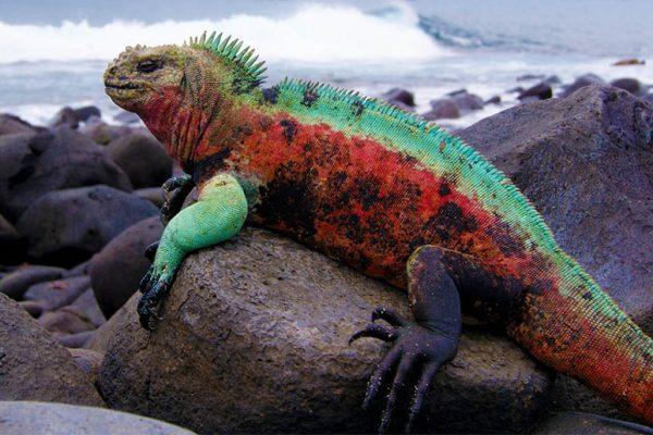 Ecuador si Galapagos
