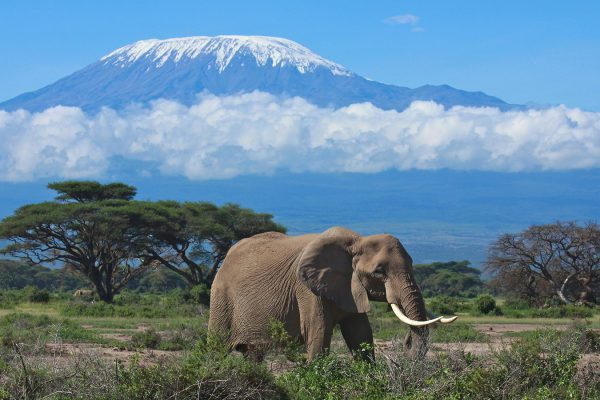Kilimanjaro , Safari, Zanzibar