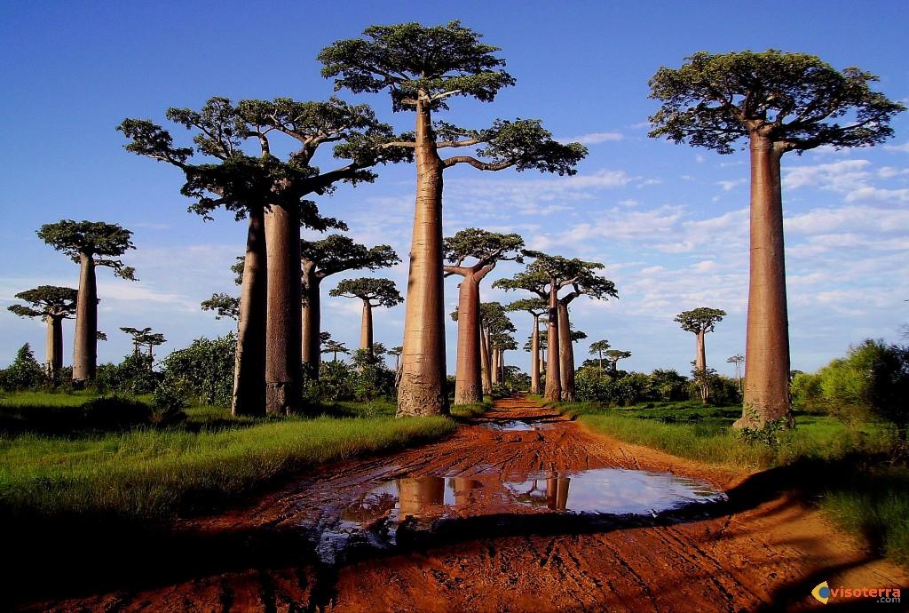 Expeditie Circuit Madagascar
