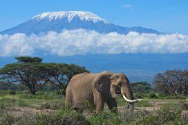 Ascensiune Kilimanjaro sau Mount Kenya