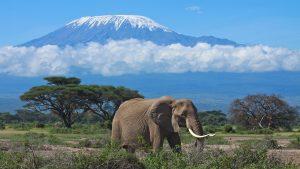 Ascensiune Kilimanjaro